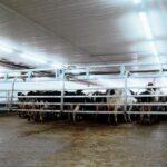 dairyfarming_cowcrowdgate_promotion_tcm49-13144_w710