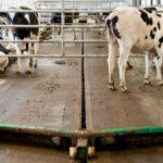 dairyfarming_pintle%20chain%20scraper%202_tcm49-14331
