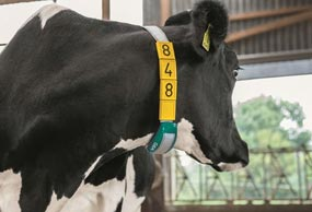 gea-cowscout-heat-detection-health-management-min