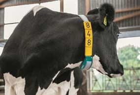 gea-dairymilk-m6900-cow-sensors-min